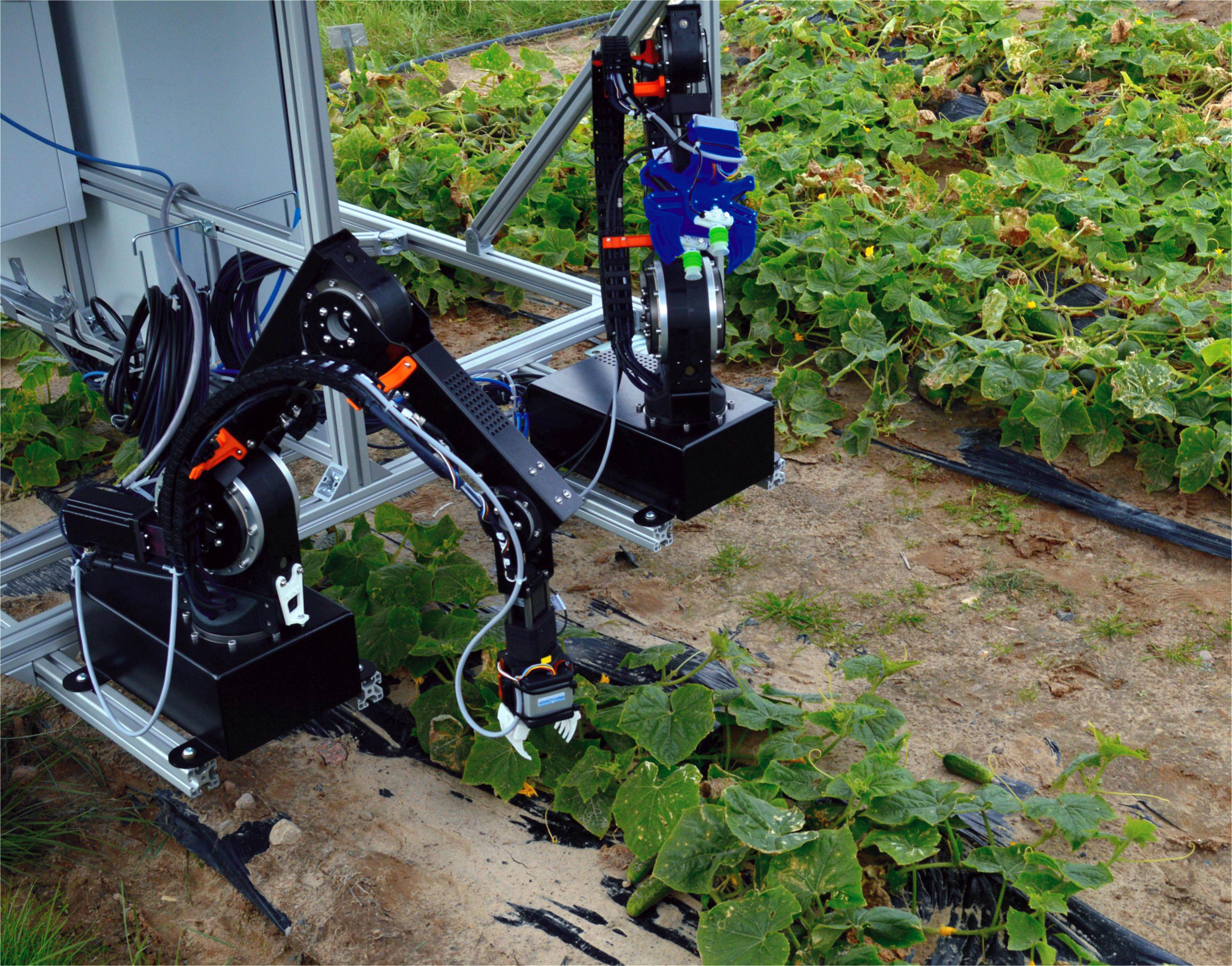 Roboter CATCH bei der Gurkenernte. Bild: Fraunhofer IPK